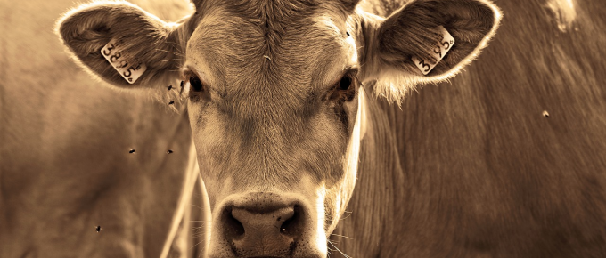 Mad Cow Disease symptoms and treatment